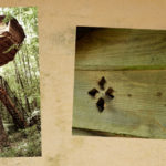 Cabane Traum à Guyonvelle